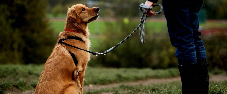 Dresaj canin in Moldova