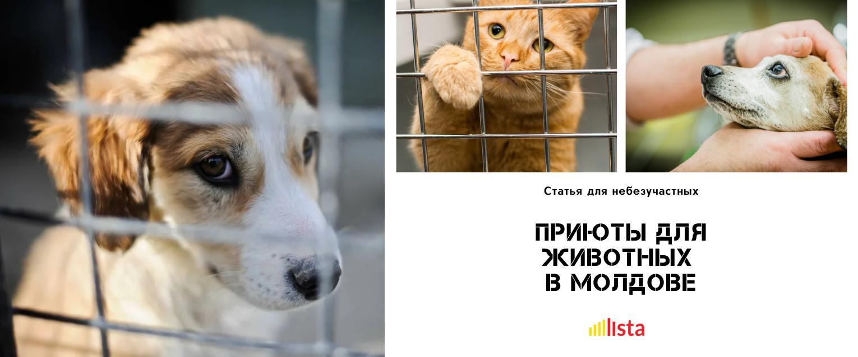 Adăposturi pentru animale în Moldova – locul unde vei găsi un suflet