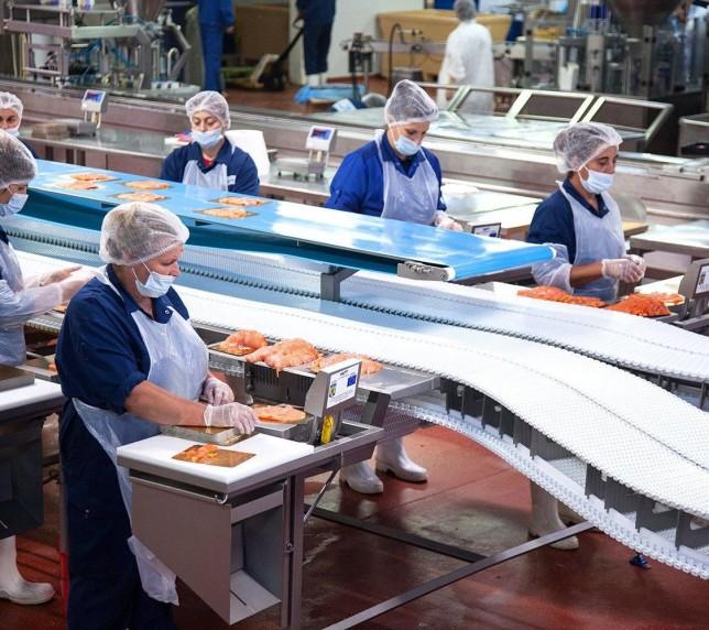 Muncitori în cadrul combinatelor de pește roșu