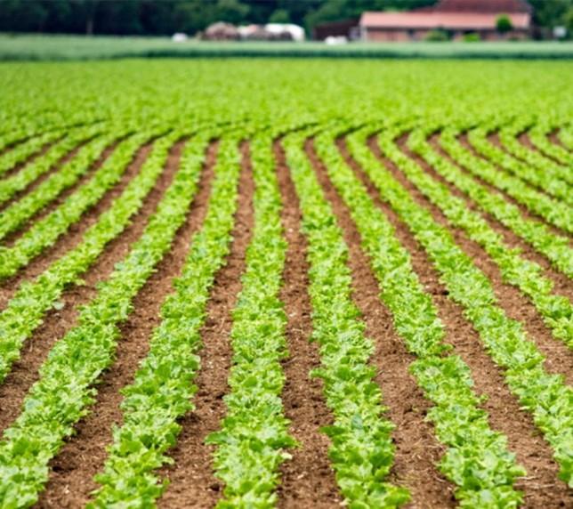 Muncitori în câmp la plantarea și cultivarea legumelor