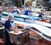 Muncitori necalificați la fabrica de prelucrare a peștelui